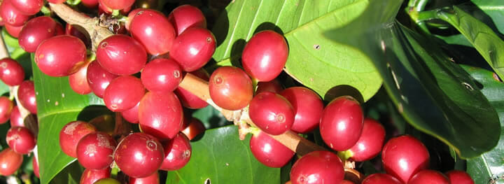 coffee-health-benefits-antioxidants