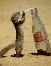 squirril-addict